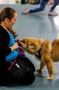 Hund som leker med leksak på hundkurs och valpkurs i växjö