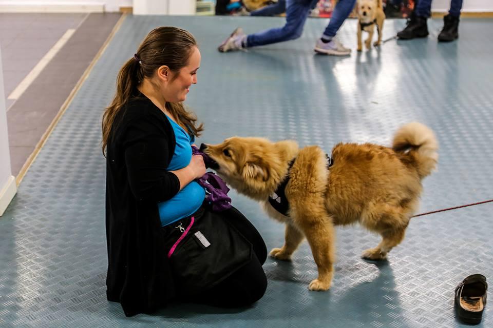 Lek är en viktig del för att skapa en god relation och regler när man tränar hund. Genom leken kan vi få hunden att bete sig önskvärt på ett vinst vinnande sätt.