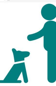 Valpkurs och hundkurs i vardagslydnad
