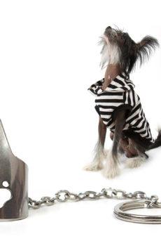 zeroplack tandstensskrap för hund att sätta på fingret