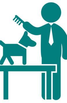 hantering av hund